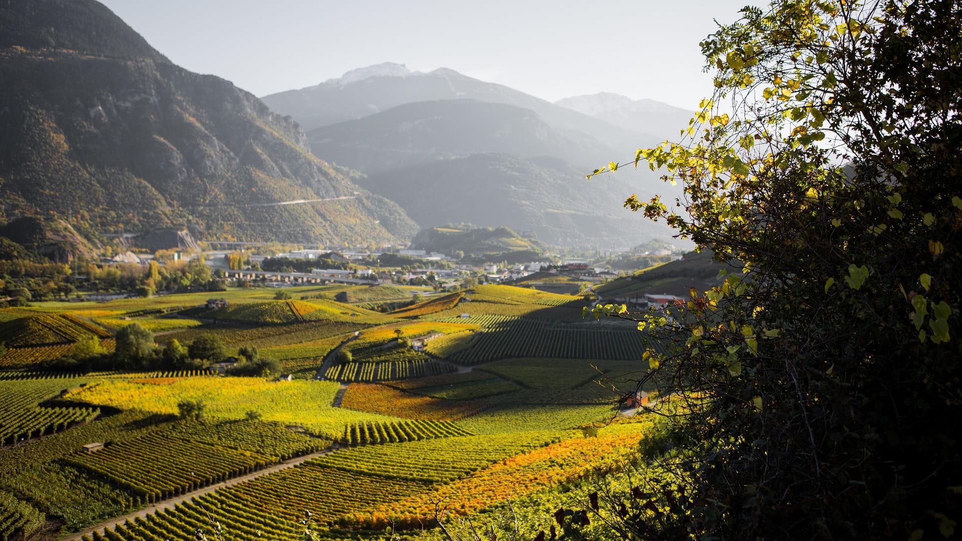 Weinberglandschaft im Wallis