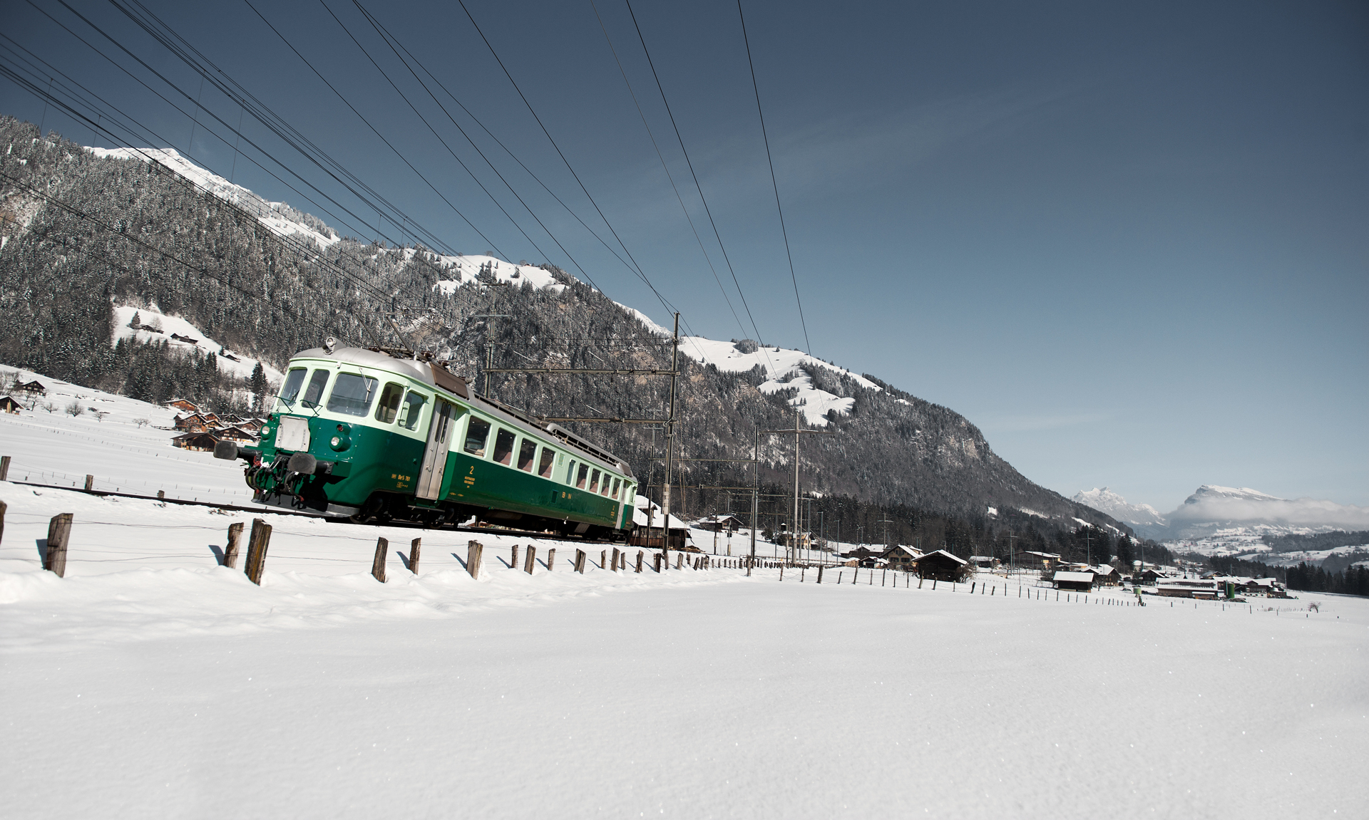 Wellensittich bei Frutigen im Winter