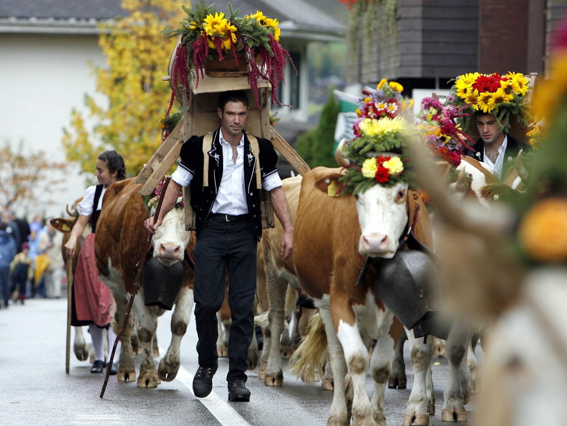 Ein Stück Schweizer Tradition aus dem Simmental zum Miterleben.