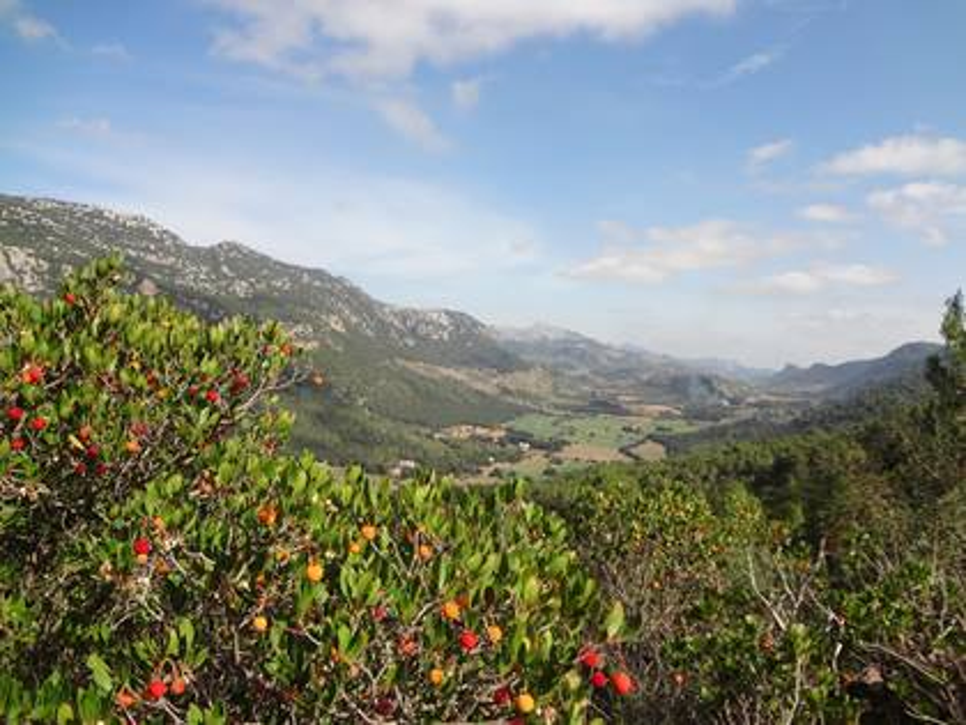 Mallorca Orient Tal